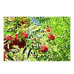 Rowan berries Postcards (Package of 8)