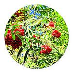 Rowan berries Round Car Magnet