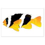 Sebae Anemonefish Posters