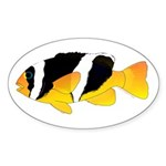 Sebae Anemonefish Sticker