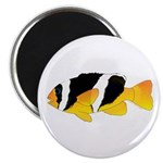 Sebae Anemonefish Magnets