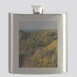 Colourful yellow gorse, Lizard Point Flask