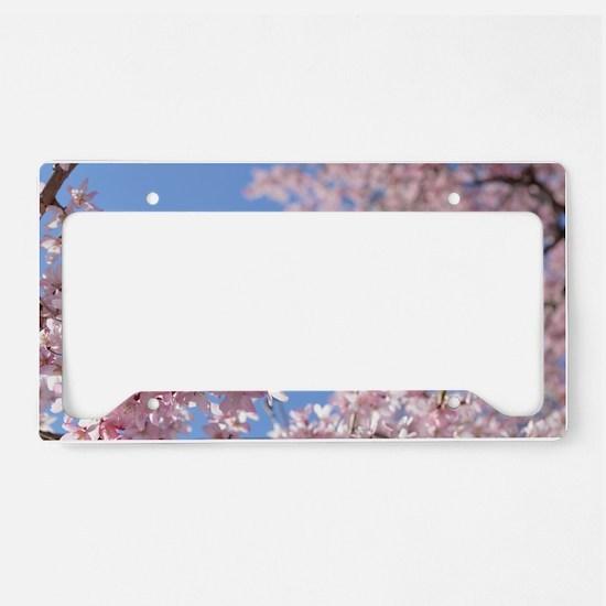 Cherry blossom Tree License Plate Holder