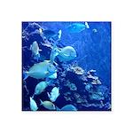 Maui Aquarium Sticker