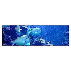 Maui Aquarium Bumper Stickers