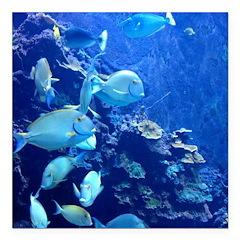 Maui Aquarium Square Car Magnet 3