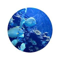 Maui Aquarium 3.5