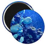 Maui Aquarium Magnets