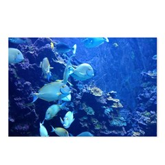 Maui Aquarium Postcards (Package of 8)