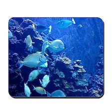 Maui Aquarium Mousepad