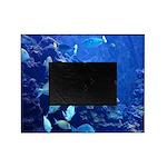 Maui Aquarium Picture Frame
