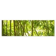 Bamboo Forest Bumper Sticker