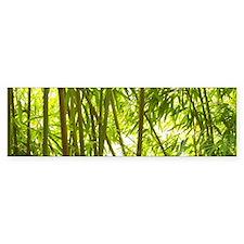 Bamboo Forest Bumper Sticker