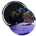 Seahorse Pair Magnets