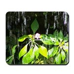 Under the Waterfall Mousepad