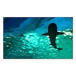 Shark! Sticker