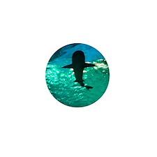 Shark! Mini Button