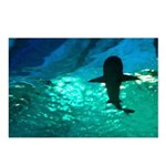 Shark! Postcards (Package of 8)