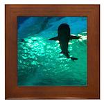 Shark! Framed Tile