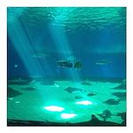 Fishy Conversation Square Car Magnet 3