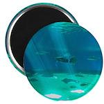 Fishy Conversation Magnets