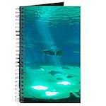 Fishy Conversation Journal