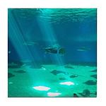 Fishy Conversation Tile Coaster