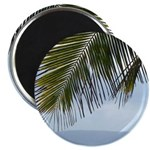 Palm Frond Magnets