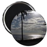 Palm Tree Evening Magnets