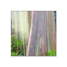 Rainbow Eucalyptus Tree Sticker