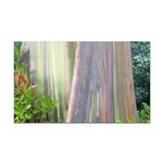 Rainbow Eucalyptus Tree Rectangle Car Magnet