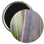 Rainbow Eucalyptus Tree Magnets