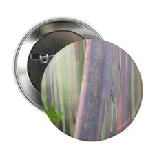 Rainbow Eucalyptus Tree 2.25