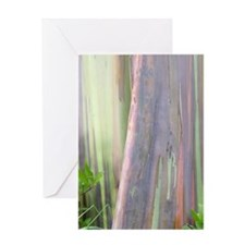 Rainbow Eucalyptus Tree Greeting Cards