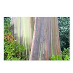 Rainbow Eucalyptus Tree Postcards (Package of 8)