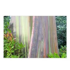 Rainbow Eucalyptus Tree Postcards (Package of 8)