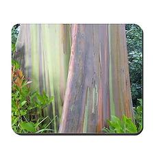 Rainbow Eucalyptus Tree Mousepad