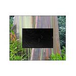 Rainbow Eucalyptus Tree Picture Frame