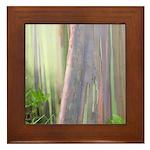 Rainbow Eucalyptus Tree Framed Tile
