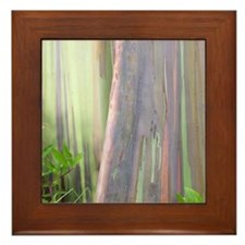 Rainbow Eucalyptus Tree Framed Tile
