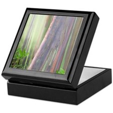 Rainbow Eucalyptus Tree Keepsake Box
