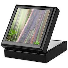 Rainbow Eucalyptus Tree Keepsake Box