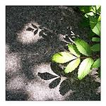 Leaf Shadow Square Car Magnet 3