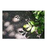 Leaf Shadow Postcards (Package of 8)