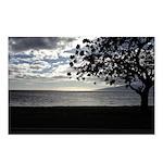 Seaside Tree Postcards (Package of 8)