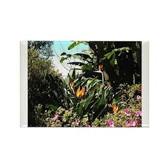 Tropical Gardens on Maui Magnets