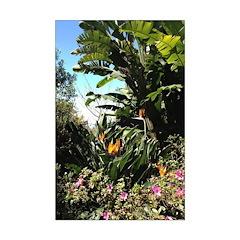 Tropical Gardens on Maui Poster Print