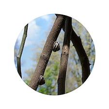 Snails on Tree 3.5