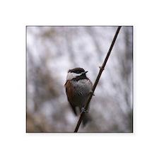 Chickadee Winter Sticker
