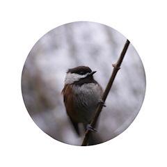 Chickadee Winter 3.5